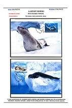极限片-哺乳类动物 - 谷雨 - 一壶清茶 三五知己