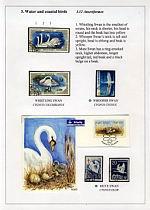 《希乌马岛的鸟类》 - 谷雨 - 一壶清茶 三五知己